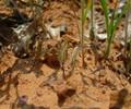 Spott the grasshopper