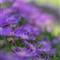 UCR_Bot_Gardens_008_web