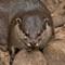 Bronx Zoo Beaver