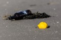 Lemon and whine bottle in the north sea tidal flats