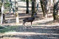 The photo been taken in Santa Lucia Preserve California