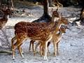 At a deer park