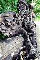 mussel bike