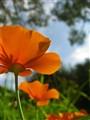 Orange Parasol For A Hot Frog