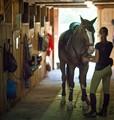 Jenifer's horse