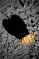 Monarch in the Sun