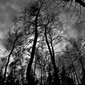 black metal trees