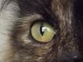 Lia's eye reflection
