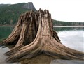 Wood in Lake