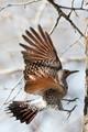Flicker in flight