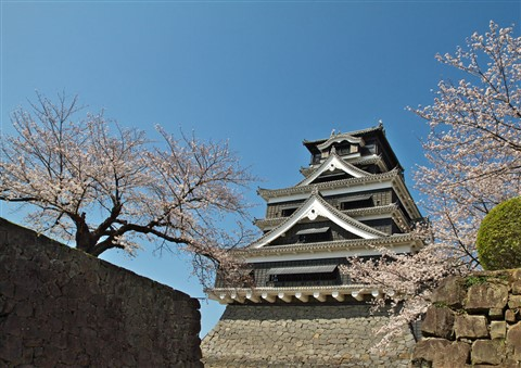 KumamotoCastle with Cherry trees in full bloom