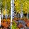 Flagstaff Aspen Grove