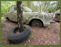 A birch has grown straight through this old tire, that obviously has rested on the ground there for a while!