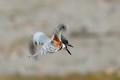 Kingfisher U-Turn