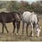 Horses 1 (Color))