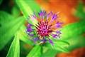 Strange flower, strange life