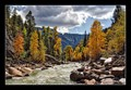 Trees by Animas River, Colorado, USA