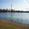 Danube & Swans