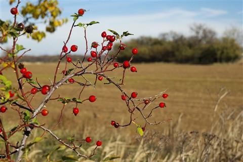 Autumnscape-03-lr