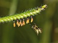 bee arriving_7691