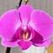 S21 Orchid Crop 3_4