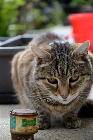 My 198 months old cat - Micó