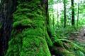 Soft moss onto hard tree bark
