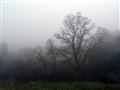 Tree'n'Mist