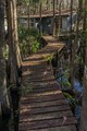 Taken in Fakahatchee Strand State Preserve, Florida