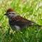P5140014_DxO Sparrow_cr