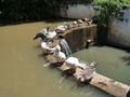 goose enjoy a rest