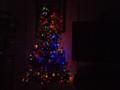 My tree 2013