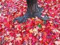Super Vivid Autumn