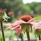 botanicaldaisy