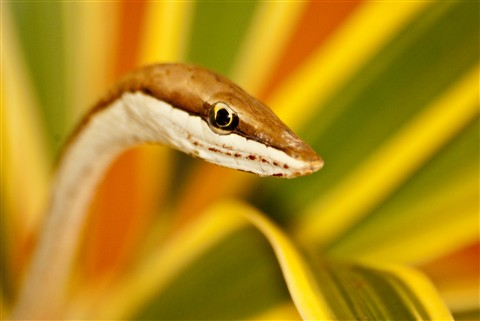 Costa_Rica-160