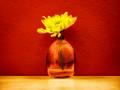 Flower. Vase. Wall