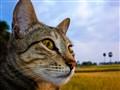 My cat poti-poochai