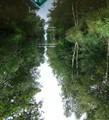Marshes near Giethoorn NL.