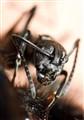Hymenopteran Beast