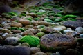Green and brown rocks on the sea shore