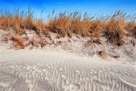 Dune at Brigantine-2