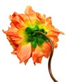 ORANGE_FLOWER_BACK