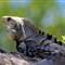Amphibians, Reptiles, Fish