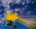 late flower