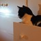 XQ2_cat