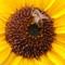 flower_bee crop
