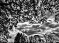 Autumn sky silhouettes