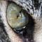 Cats eye 3