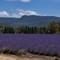 Lavender D5600 024
