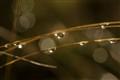 Sprkling Drops